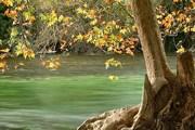 Купаться в реках Воклюза запрещено. // Laurence/flickr.com