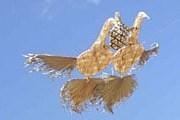 Там можно увидеть самых невероятных воздушных змеев. // farm1.static.flickr.com