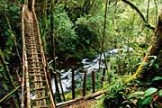 Джунгли в Папуа-Новой Гвинее // GettyImages