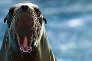 Беседа с морскими львами обойдется в $80. // floranimal.ru