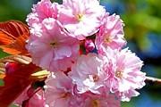Белоруссия приглашает туристов встретить весну. // freefoto.com