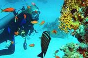 Коралловые рифы Египта - в числе номинантов на чудеса природы. // saga.ua
