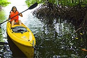 Обновленный курорт предлагает прогулки по мангровым лесам. // gayana-eco-resort.com