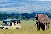 Парк Масаи-Мара - одна из достопримечательностей Кении. // GettyImages