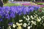 Канберра с ее популярным фестивалем Floriade особенно удивлена результатами. // amazingaustralia.com.au