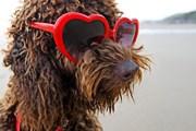 За появление с собакой на пляже придется заплатить. // GettyImages