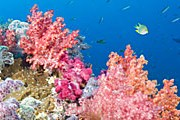 Повышенная кислотность воды губит кораллы. // GettyImages