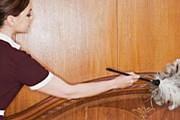Загадочные пятна и клопы – в грязных отелях США // GettyImages / Image Source
