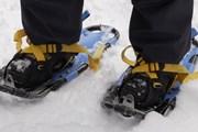 Специальной подготовки для прогулки на снегоступах не требуется, нужно только снаряжение. // naturalsciences.org