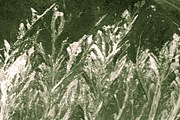 Рисунок, который местные жители назвали «Камышовые заводи». // russian.people.com.cn