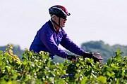 Велосипедисты в Бордо должны быть трезвыми. // duvine.com