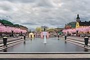 Цветение сакуры в Стокгольме // flickr.com