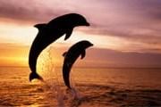 Для дельфинов здесь созданы все условия. // GettyImages