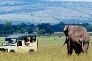 Популяции диких животных в Масаи-Мара сокращаются. // GettyImages