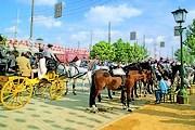 Конные упряжки - единственный разрешенный вид транспорта на ярмарке. // feriadesevilla.andalunet.com