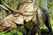 """В лесу можно встретить """"живых"""" динозавров. // ttg.com.pl"""