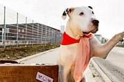 Домашним животным придется путешествовать альтернативными способами. // GettyImages / Thomas Schweizer