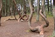 От частых прикосновений у деревьев стирается кора. // Wikipedia