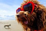 На Кипре собаки могут отдыхать на отельном пляже. // GettyImages / Peter Cade
