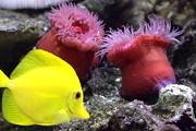 Обитатели моря - в новом музее Шарджи. // Travel.ru