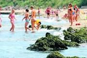 В Гдыне нельзя купаться из-за ядовитых водорослей. // gdynia.naszemiasto.pl