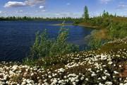 Этнографический и экологический виды туризма - в числе возможностей отдыха на Ямале. // Travel.ru