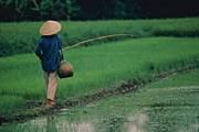 Экзотический Вьетнам остается притягательным. // GettyImages