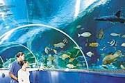 В аквариуме Blue Reef. // tynemouthholidaycottages.co.uk