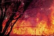 Пожаром охвачено 150 тысяч квадратных метров. // forest.geoman.ru