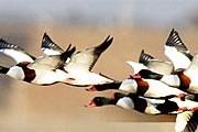 Незабываемое зрелище обеспечено туристам на фестивале птиц. // seosanbird.com