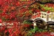 Живописная осень привлекает в Японию туристов. // gandex.ru