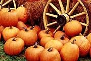 На праздник привезут 4 тонны тыкв. // blogspot.com