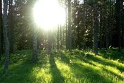 В Свердловской области - четыре природных парка. // Travel.ru