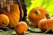 На ярмарке в ботаническом саду можно будет приобрести изделия из тыквы. // liveinternet.ru