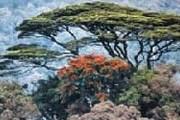 Ньюнгве - третий по величине природный парк Руанды. // floranimal.ru