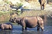 Национальный парк Казиранга очень популярен у туристов. // india-wildlife-tours.com