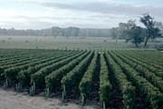 Виноградники Бордо – визитная карточка региона. // Panoramic Images