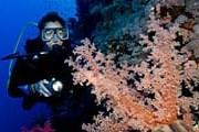 Остров Бонайре набирает популярность у любителей дайвинга. // GettyImages
