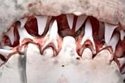 У берегов ЮАР нападению акул подвергаются несколько человек в год. // Andrew Holt