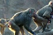 В парке Everland обитает множество животных. // everland.com