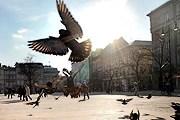 Голуби рекламируют Краков. // AG / Tomasz Wiech