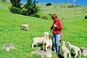 Туристов приглашают пожить на ферме. // elizabethhansen.net