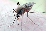 Комаров уничтожают, чтобы обеспечить туристам спокойный отдых. // naturdieta.com