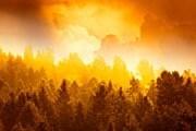 Лесные пожары часто вызывают костры, разожженные туристами. // Paul Giamou