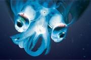 Обитатели морских глубин предстали перед публикой. // nhm.ac.uk