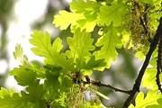 Выбрать деревья предложила госслужба заповедного дела Украины. // receptsite.com