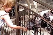 Посетители смогут покормить животных. // wordpress.com