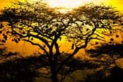 В Кении – туристический бум. // Scott Stulberg