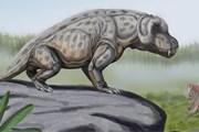 Пермский геологический период - последний период Палеозоя. // Wikipedia