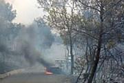Лесной пожар подобрался вплотную к пляжу. // sphotos.ak.fbcdn.net